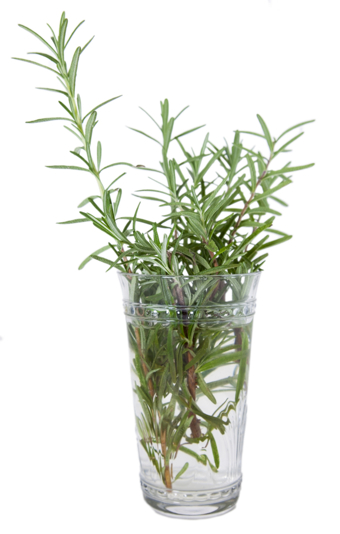herbs in a vase
